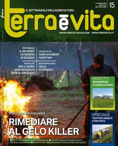 Terra e Vita n.15